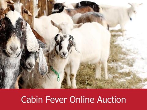 Cabin Fever Online Auction at Grace Cottage